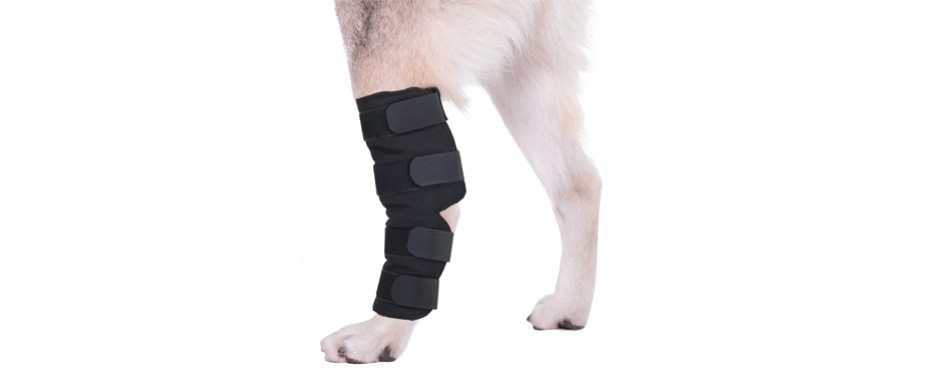Top 10 Punto Medio Noticias | Canine Knee Brace 3 0 Mm Neoprene