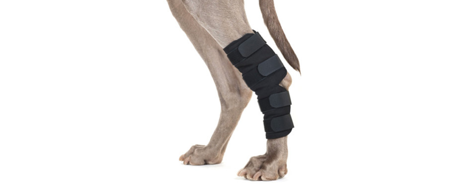 back on track therapeutic dog leg brace