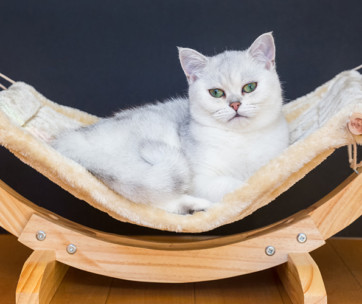 best cat hammocks