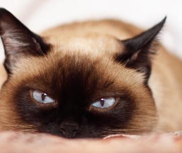 best cat muzzles