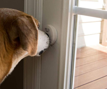 best dog doorbell