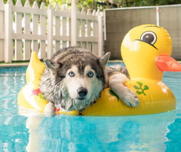 best dog floats for pool