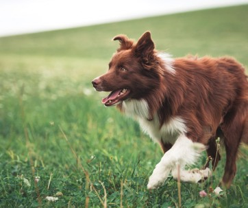 best dog joint supplements