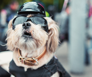 best dog motorcycle helmets