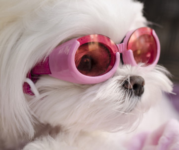 best dog sunglasses
