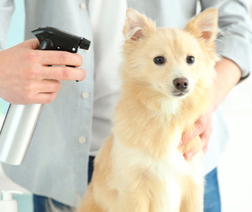 best dry shampoo for dogs