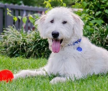 best electric dog fences