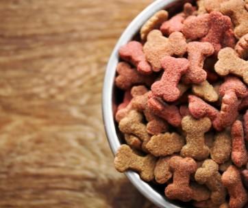 best grain free dog food