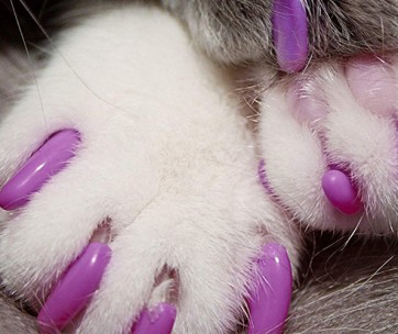best nail caps for cats