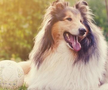 outdoor dog breeds