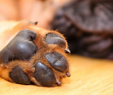 best paw protection waxes