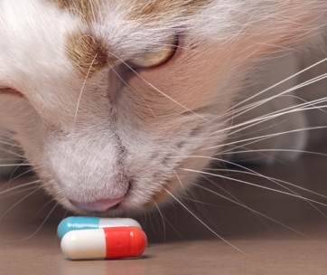 best way to give a cat a pill