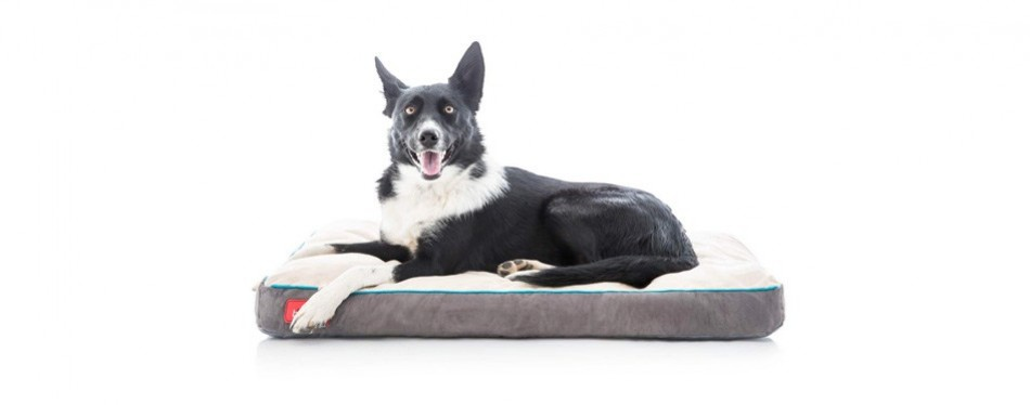 brindle soft shredded memory foam dog bed