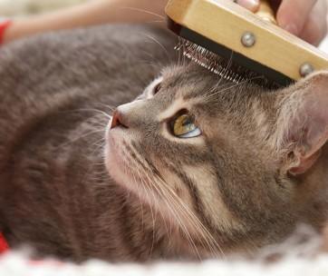 cat grooming guide
