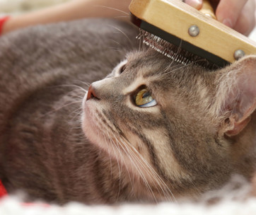 cat grooming guide