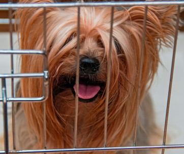 dog crate sizes - what do i need
