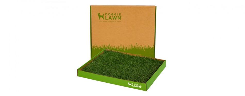 doggie lawn potty