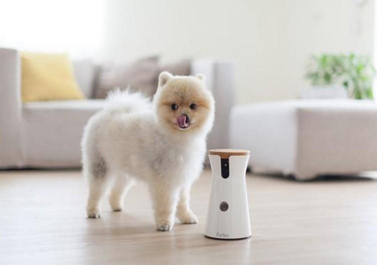 furbo camera for dogs