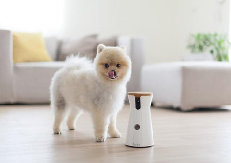 furbo camera for dogs