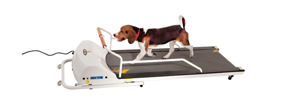 gopet treadmill small medium