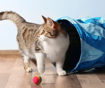 great ways to keep your cat entertained