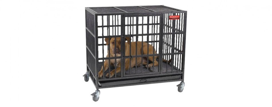 guardian gear proselect empire dog crate