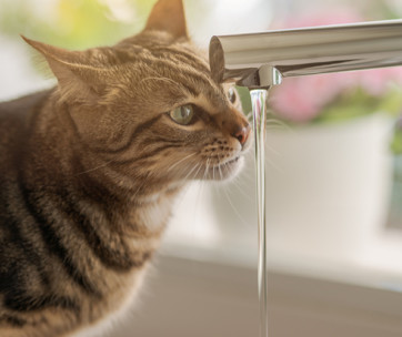 how much water should your cat be drinking every day