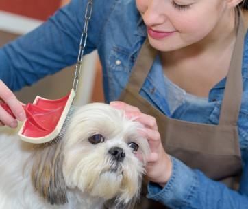 how to choose dog groomer