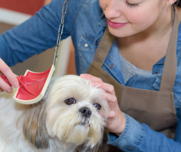 how to choose dog groomer