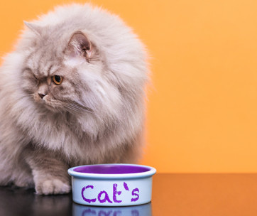 how to choose the best cat food for your feline