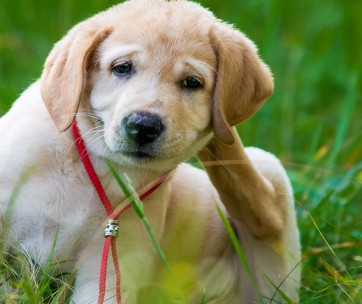 how to get rid of fleas on your dog