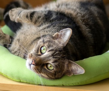 how to train your cat to love their bed
