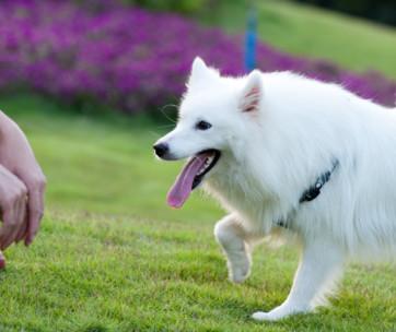 improve dog recall