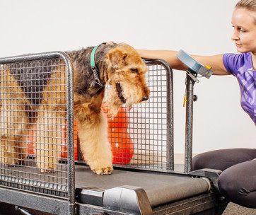 indoor dog training train your dog to use a treadmill