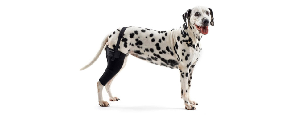 kruuse rehab dog knee brace