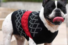 kyeese Dog Sweater