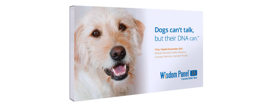 mars veterinary wisdom panel dna test kit