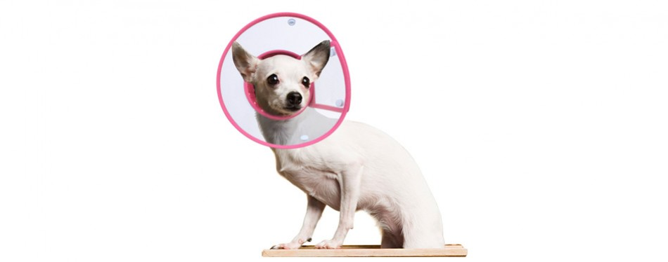 petbaba recovery collar