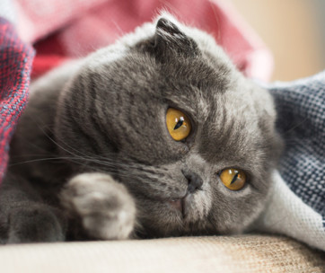 separation anxiety in cats signs and treatment
