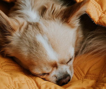the best dog sleeping bags