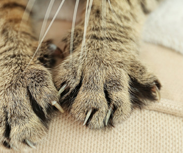 tips to prevent your cat scratching the furniture