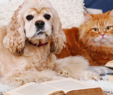 top 10 friendly pet colleges in the usa
