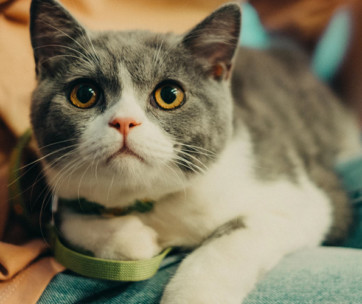 top 10 tips to keep your cat healthy