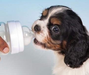 top 8 best puppy milk replacers
