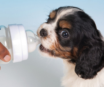 top 8 best puppy milk replacers