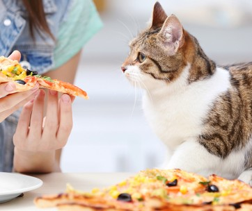 what human foods can cats eat