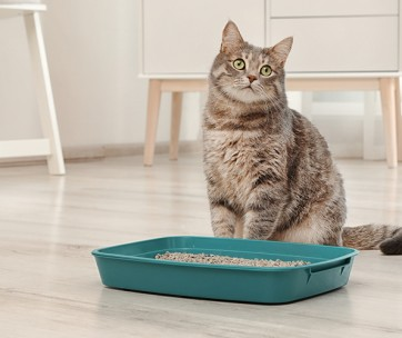 where to place your cat's litter box