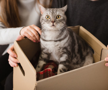 why do cats love boxes so much
