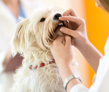 why is oral dog health so important