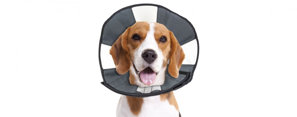 zenpet procone pet e-collar for dogs